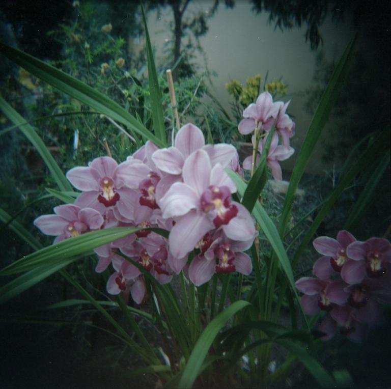 2017_07_04 Holga Kodak Portra 400 01