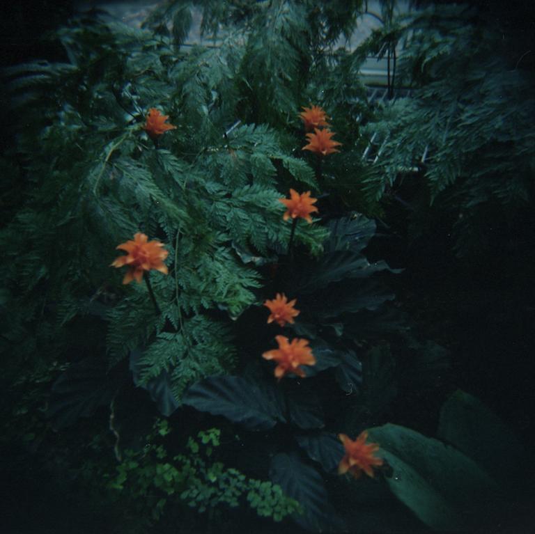 2017_07_04 Holga Kodak Portra 400 02